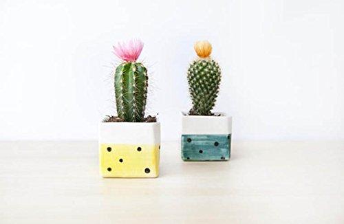 Maceta de cerámica cuadrada hecha a mano para cactus o plantas ...