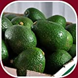 24 Fresh California Hass Avocados