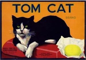 MAGNET Orosi Tulare County Tom Cat Lemon Citrus Fruit Crate Magnet Vintage Art Print