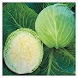 buy Cabbage (Early Jersey Wakefield) Seeds now, new 2018-2017 bestseller, review and Photo, best price $5.69