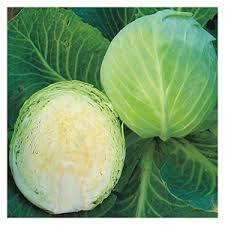Cabbage (Early Jersey Wakefield) Seeds