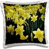 WhiteOaks Photography and Artwork - Daffodils - Daffodil Field is a photo of a group of springtime daffodil flowers - 16x16 inch Pillow Case