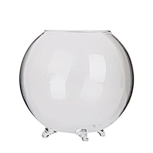 - B Blesiya Clear Glass Flower Vase Round Bud Vase Decorative Floral Vase Plants Terrarium Pot for Home Decor Office Ornaments