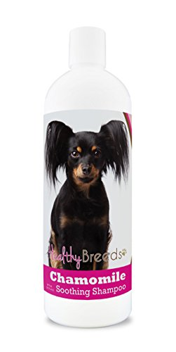 Healthy Breeds Chamomile Dog Shampoo & Conditioner with Oatmeal & Aloe for Russian Toy Terrier - OVER 200 BREEDS - 8 oz - Gentle for Dry Itchy Skin - Safe with Flea and Tick Topicals by Healthy Breeds (Image #2)