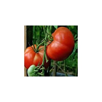 Tomato Seed-Big Boy Hybrid Tomato Seed-35 Seed Count : Garden & Outdoor