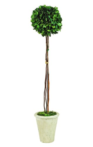 Galt International Naturally Preserved Real Boxwood Ball Topiary Plant with Twig Stem and Restoration Style White Pot, 29.5-Inch (Trees Inside)