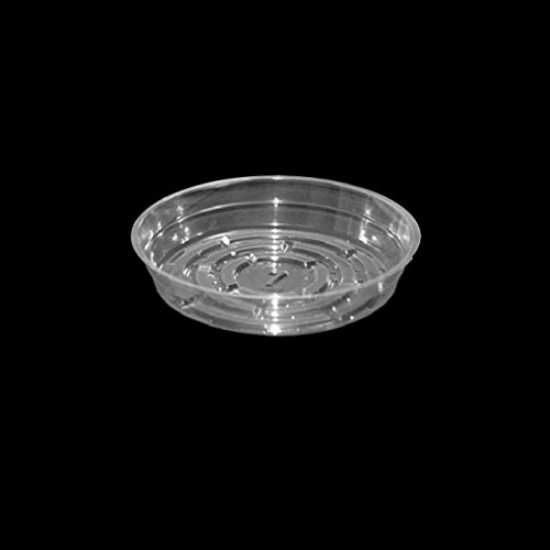 Clear Plastic Plant Saucers - 6 Inch, 25 Pack