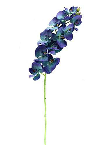 Phalaenopsis Spray (Afloral Signature Collection Phalaenopsis Orchid Spray in Blue - 5.5