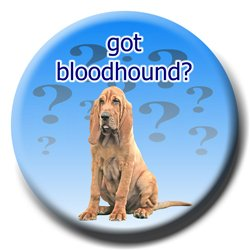 Bloodhound Got? Pin Badge