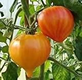 Tomato Orange Russian 250 Seeds