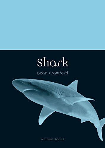 Shark (Animal)