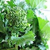 Broccoli Rabe Seeds (CERTIFIED USDA ORGANIC) by Stonysoil Seed Company