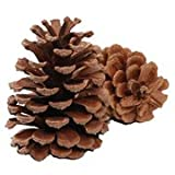 Pine Cones - Natural - 1 pound (1 pack)