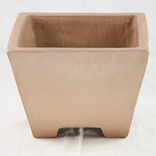 Semi Cascade Bonsai - Square Semi Cascade Zisha Bonsai Pot and Orchid Planter - 8.75