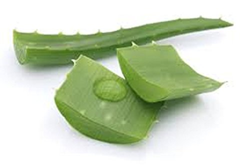 Fresh Organic Aloe Vera Cut Leaf Large 2 Pounds