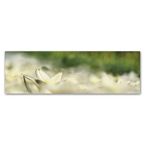 Trademark Fine Art ALI1859-C1032GG White Tulip Scape by Cora Niele