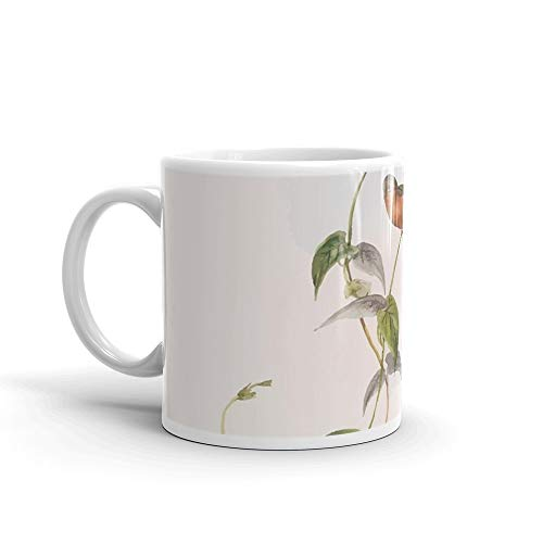 A monograph of the Trochilid or family of humming birds by John Gould 1861 V2 070 Leucippus Fallax Mug 11 Oz White Ceramic
