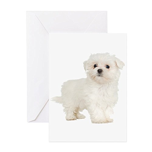 CafePress Maltese Greeting Card, Note Card, Birthday Card, Blank Inside - Christmas Maltese Cards