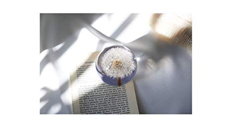 K-Community Dandelion Paperweight - Crystal Clear Resin with Dandilion Puff ()