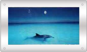 nature spirit pictures animated wall art moving picture frame dolphin in ocean beach - Moving Picture Frame