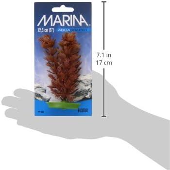 5-Inch Marina Aquascaper Foxtail Plant