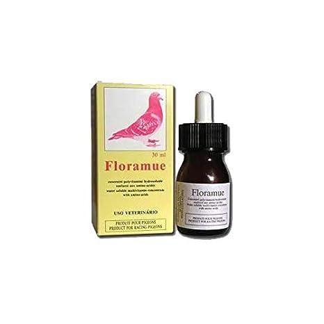 floramue Pigeon Plumas y mue: Amazon.es: Productos para mascotas