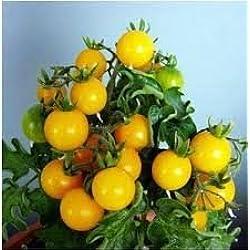 30pcs Fruit Yellow Cherry Tomato Seeds, Original Package Mini Bonsai Tomato Seeds Four Seasons Bonsai Fruit Seeds
