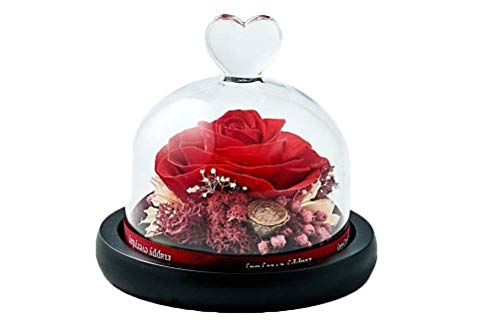 Dakotan Handmade Eternal Rose- Preserved Flower Rose with Heart Shape Glass -Romantic Gifts for Her, Valentine's Day Mother's Day Christmas Anniversary Birthday Thanksgiving (Red) (Valentines Roses Red)