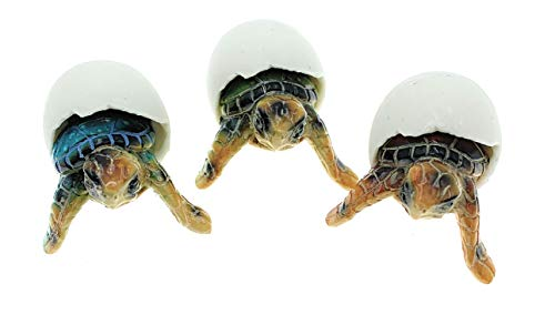 Globe Imports Baby Sea Turtles Hatching from Eggs Mini Figurines, Set of 3