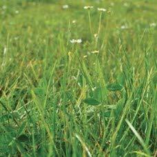 Herbicida. Envases de 1 y 5 litros. (1): Amazon.es: Industria ...