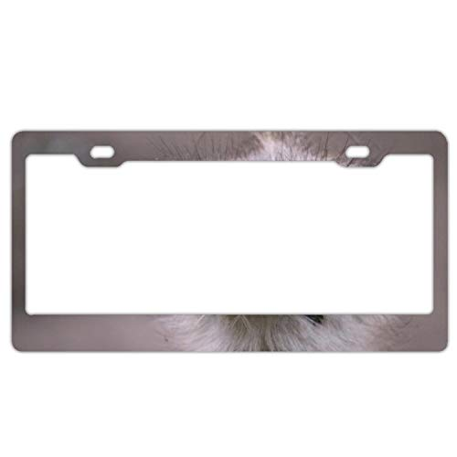 poopmick License Plate Ostrich Car Tag for Cool Men and Women