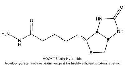 BS-19 - Hook Biotin-LC-Hydrazide Kit - Hook Carbohydrate Reactive Biotin Reagents & Kits for Highly Efficient Protein Labeling, G-Biosciences - Pack of 10