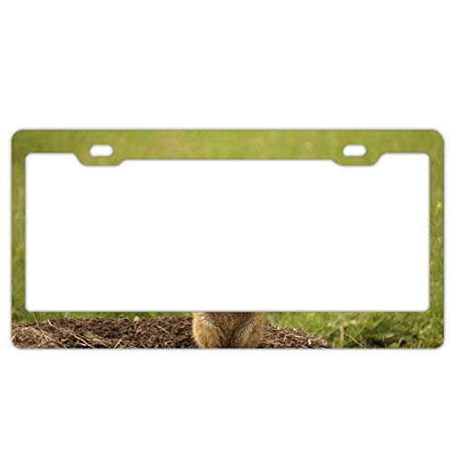 Zogpemsy Prairie Dog Rodent Standing Home,Bathroom and Bar Wall Decor Car Vehicle License Plate Metal Tin Sign Plaque