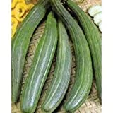 David's Garden Seeds Cucumber Slicing Armenian Dark Green SRL124 (Green) 50 Heirloom Seeds