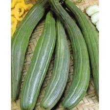 David's Garden Seeds Cucumber Slicing Armenian Dark Green SL1244 (Green) 50 Non-GMO, Heirloom Seeds]()