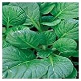 Tatsoi Chinese Mustard Asian Vegetable 25+ Seeds