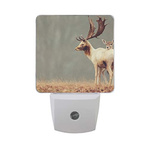 - Night Light Deer Animals Nature Led Light Lamp for Hallway, Kitchen, Bathroom, Bedroom, Stairs, DaylightWhite, Bedroom, Compact