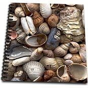 3dRose db_4381_1 Sea Shells-Drawing Book, 8 by 8-Inch