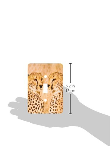 3dRose LSP/_71043/_1 Kenya Masai Mara National Reserve Two Cheetahs Single Toggle Switch