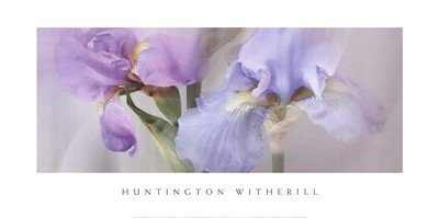 Iris Witherill - (18x36) Huntington Witherill Iris #22 Art Print Poster by Poster Revolution