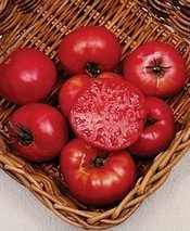 Tomato Mortgage Lifter Great Heirloom Garden Vegetable by Seed Kingdom Bulk 1/4 Lb (Mortgage Lifter Tomato)