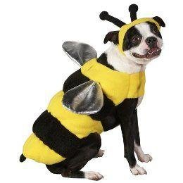 Image result for dog in bee costume