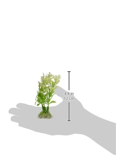 Amazon.com : eDealMax 3-piezas de plástico acuario de agua Grass, DE 4, 1 pulgadas, Verde/Blanco : Pet Supplies