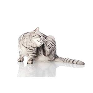 Peticare Gato Aceite de Cuidado Limpiador para Acaros del Oido y Anti-Parasitos – Gotas de Tratamiento, Limpia Eficazmente Orejas, Detiene Otitis Parasitaria, 100% Organico – petCat Health 3011