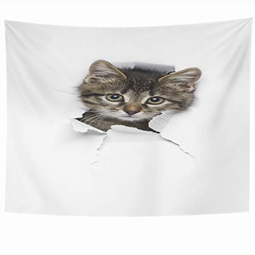 (Ahawoso Tapestry 90x60 Inch Hole Adorable Kitty Little Grey Tabby Fur Cat Nature Curious Cute Domestic Ear Eye Mischief Tapestries Wall Hanging Home Decor for Living Room Bedroom Dorm)