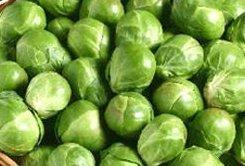 BRUSSEL SPROUTS - Bedford Darkmar 21 - 250 seeds