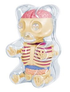4D Master Baby Gummi Bear Skeleton Anatomy Model -