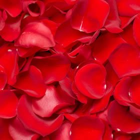 (GlobalRose 5000 Fresh Red Rose Petals - Real Petals with Fast Delivery - Perfect for Valentine´s Day)