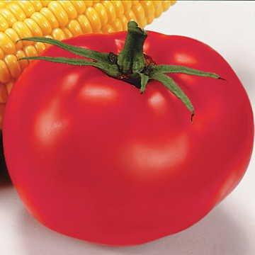 Park Seed Better Boy Hybrid Tomato Seeds