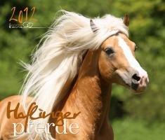 Haflinger Pferde 2012: Die schönen Haflinger